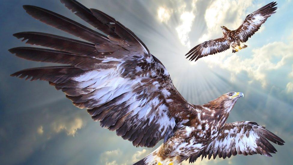 'águilas
