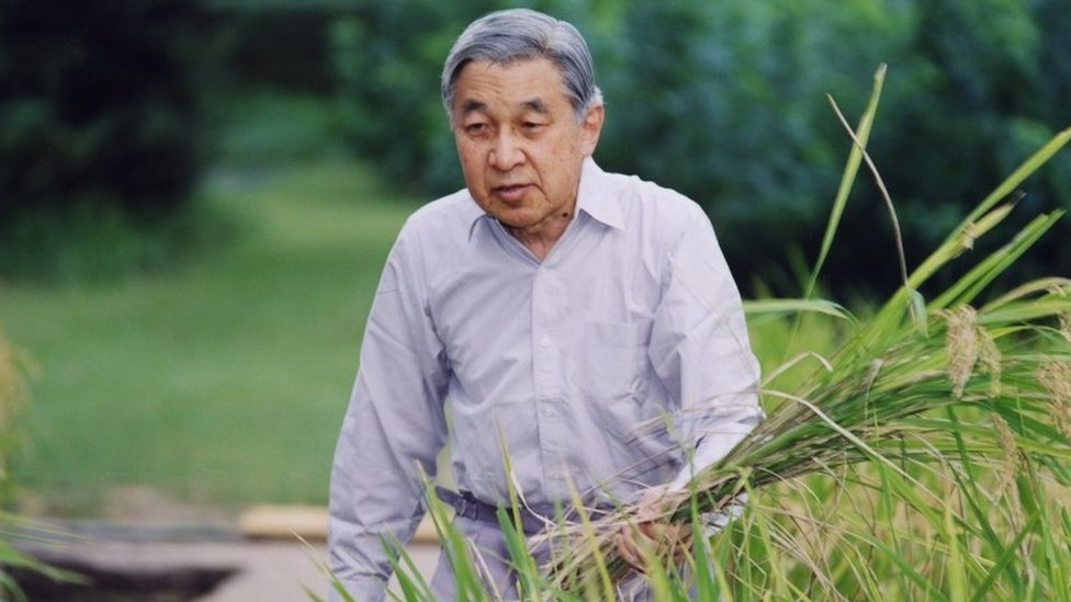 Emperor Akihito harvests rice in the grounds of the Imperial Palace in Tokyo (2006)
