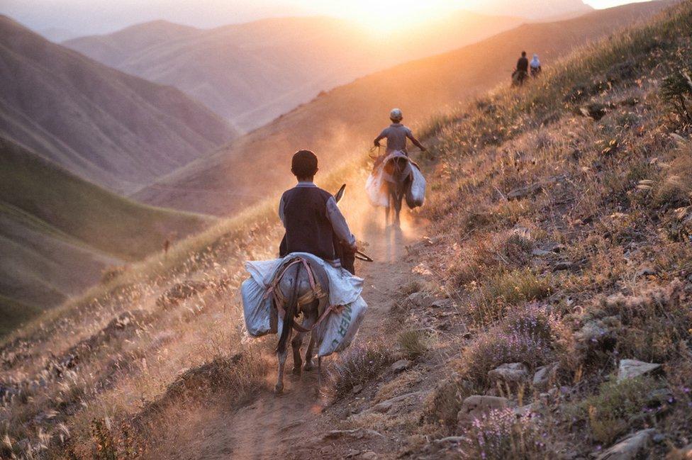 Boys ride donkeys into a sunset
