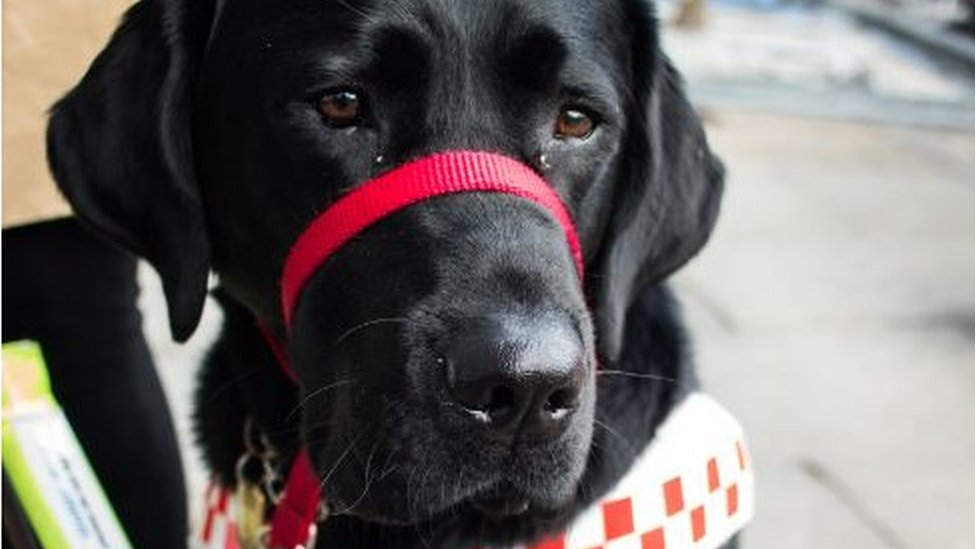 'Refusing my guide dog is not just illegal, it's wrong'