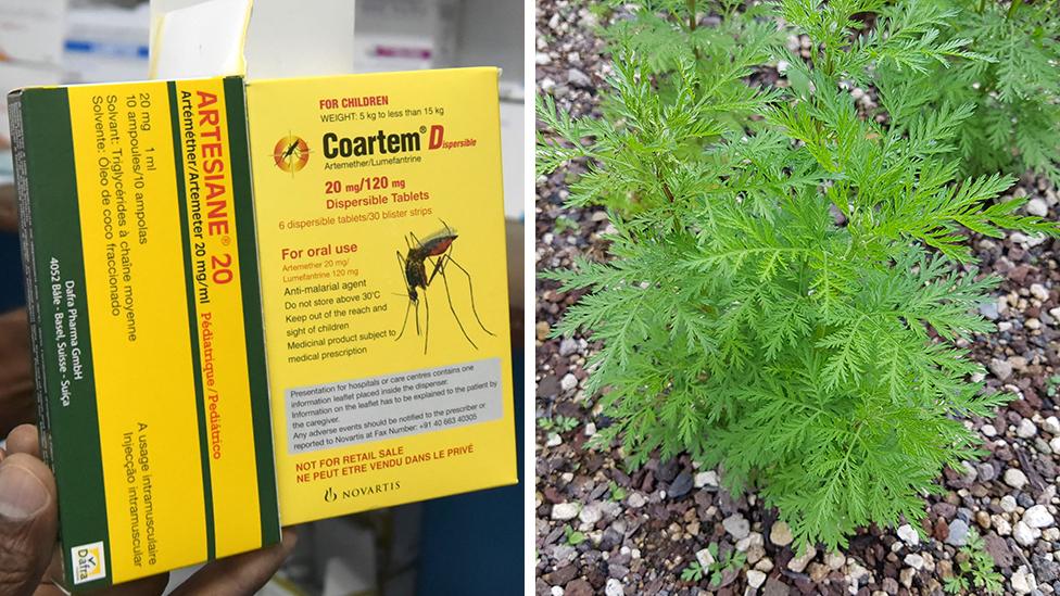 Composite image of malaria medication and artemisia plant