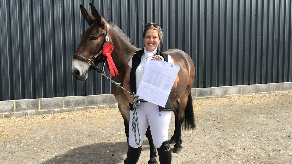 Wallace the mule wins first dressage event