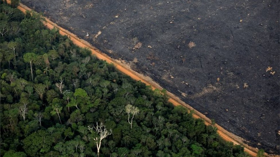 Pandangan dari udara menunjukkan sebidang lahan Amazon yang digunduli dekat Porto Velho pada 17 September 2019