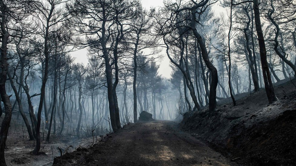 Smoke rises from a blackened road leading through a forest ravaged by fire