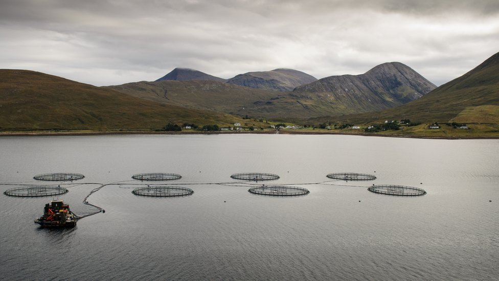 Fish farm cages