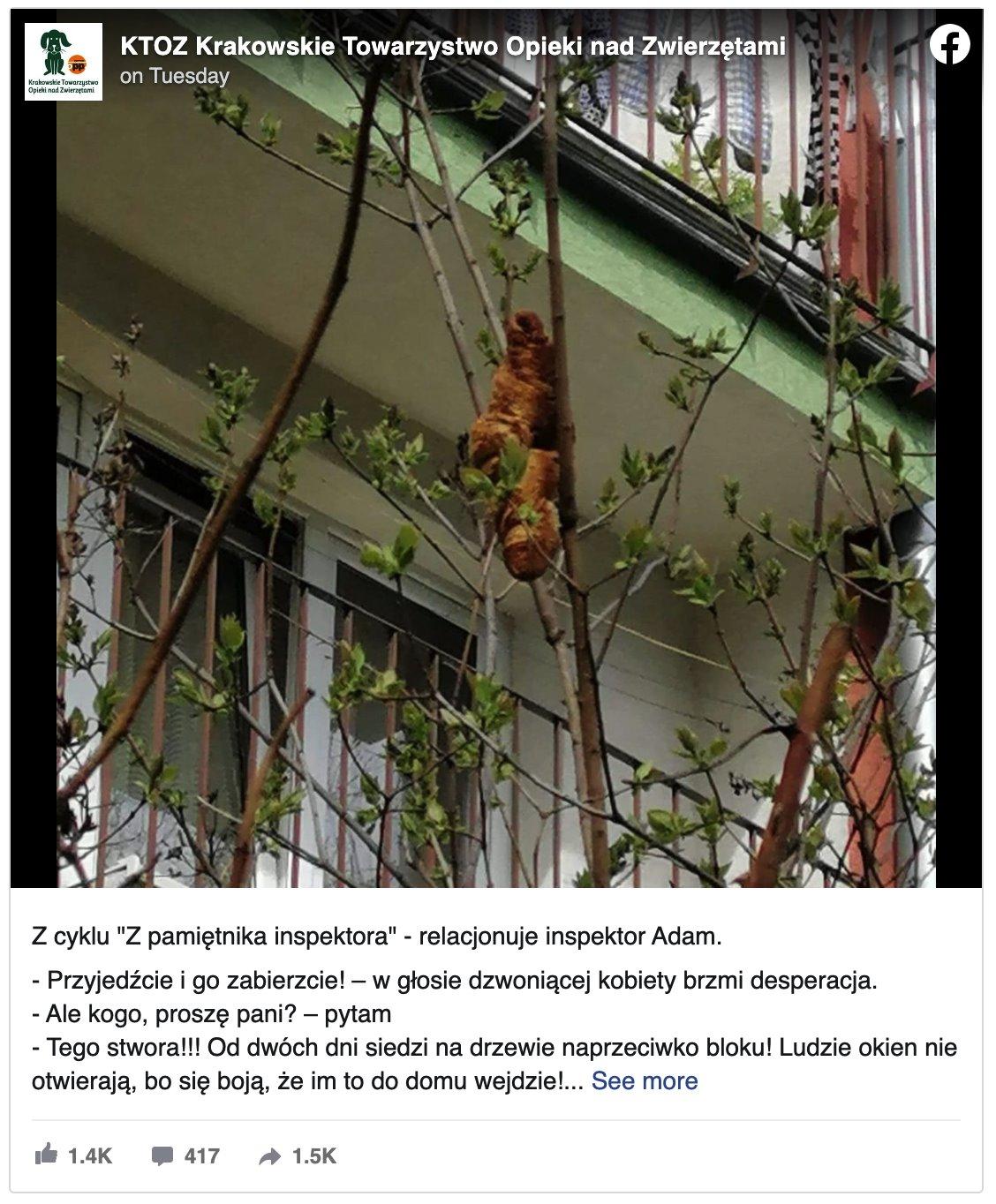 Skrinšot objave na Fejsbuk stranici poljske organizacije za zaštitu životinja