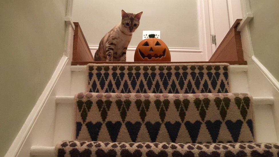 Gato con una calabaza de Halloween mira hacia la escalera.