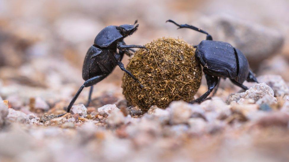 Комахи вимирають - вчені б'ють на сполох