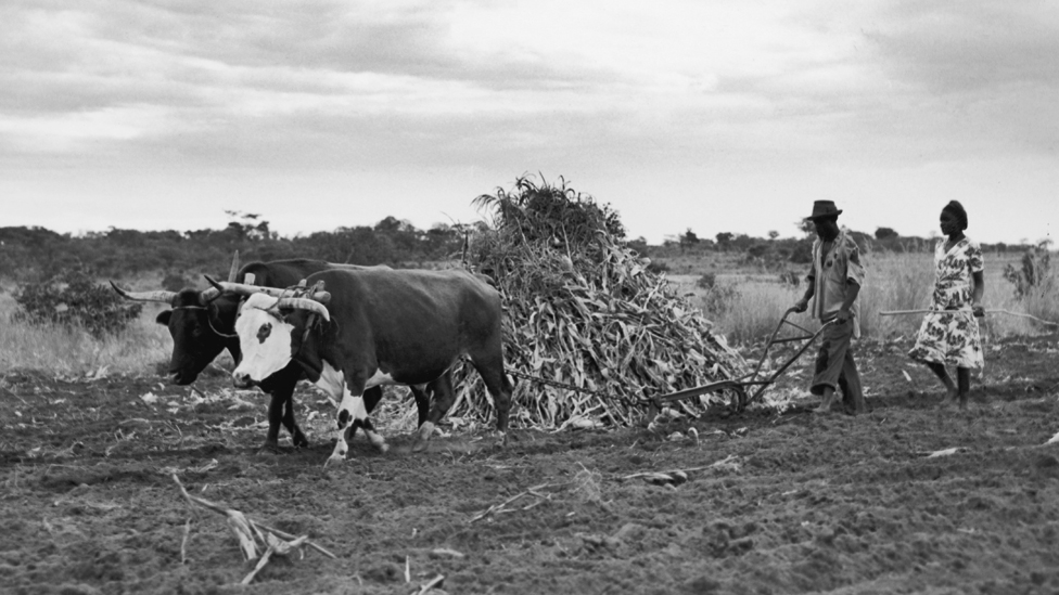 Farmers in Rhodesia, 1955