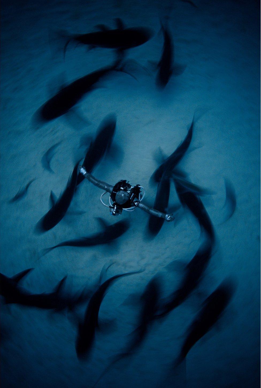 Shark behaviourist Cristina Zenato surrounded by sharks in The Bahamas