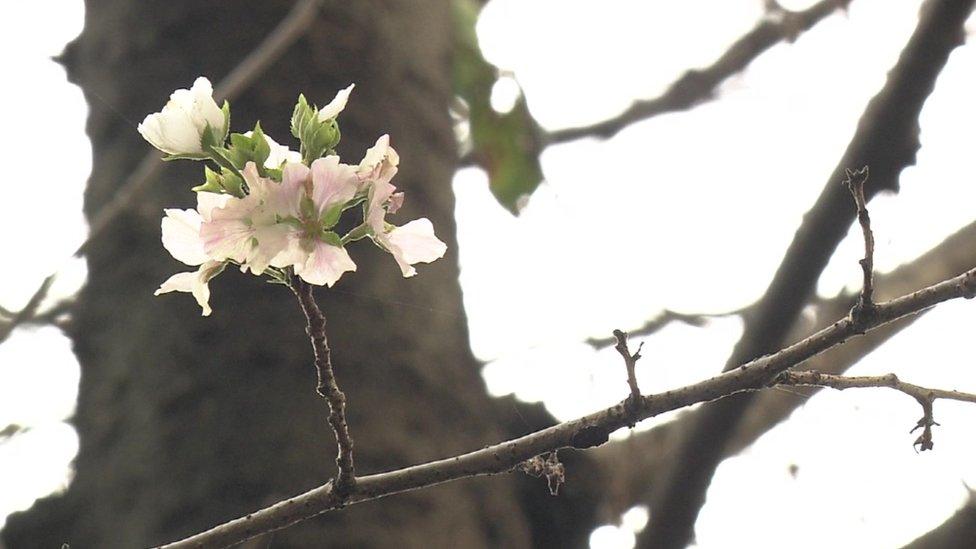 Ružičasti i beli cvetovi