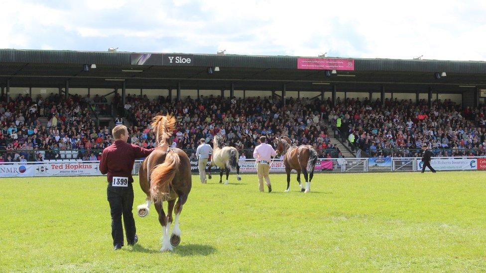 Cystadleuaeth stalwyni cob, a fel fyddech chi'n disgwyl, mae'reisteddle yn llawn // The Cob stallion competition watched by an overflowing grandstand