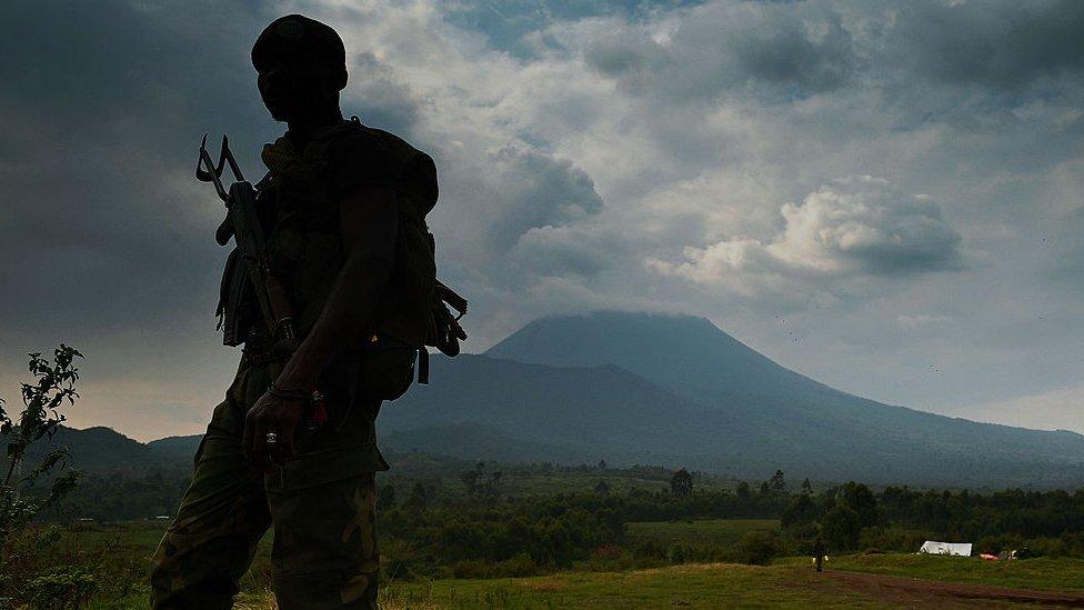 gorila, Kongo