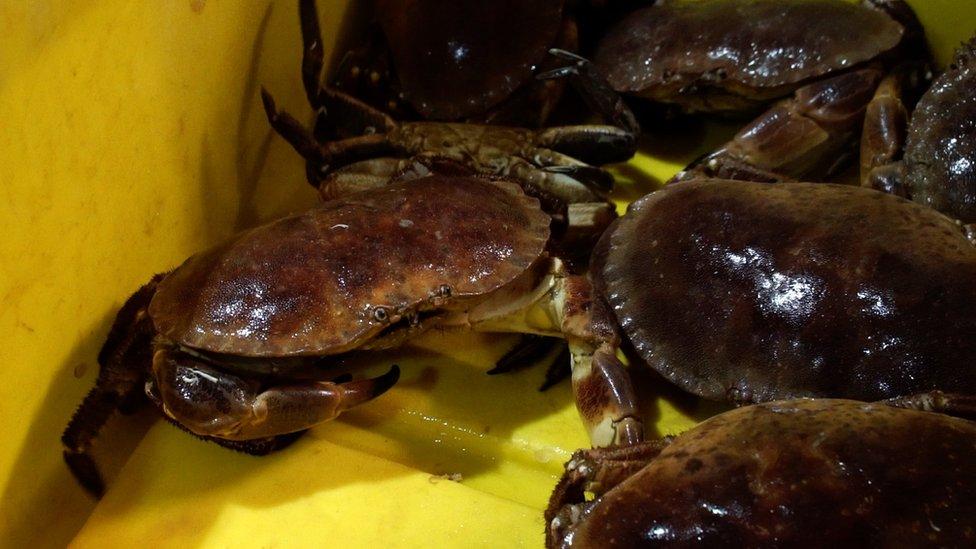 Image shows crabs at a fish market