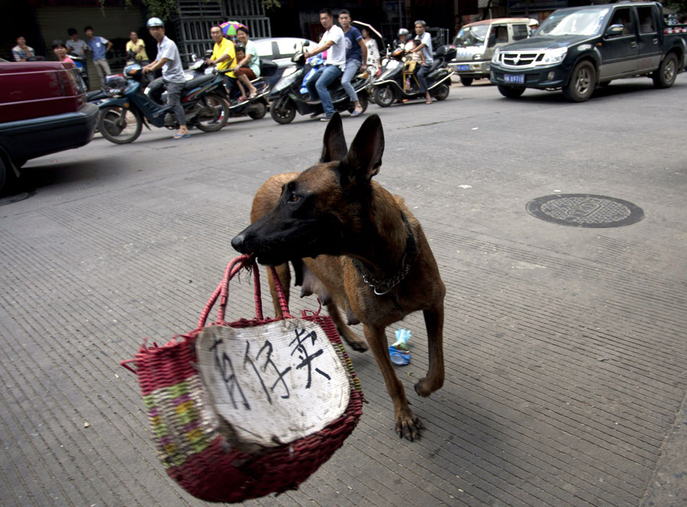 "Activists use a dog carrying a basket with a message in Chinese ""Child for sale"""