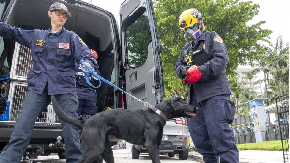 Equipos de búsqueda canina de la unidad de Búsqueda y Rescate del Cuerpo de Bomberos de Miami-Dade.
