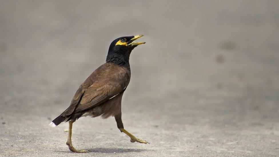 Especimen de la especie de ave