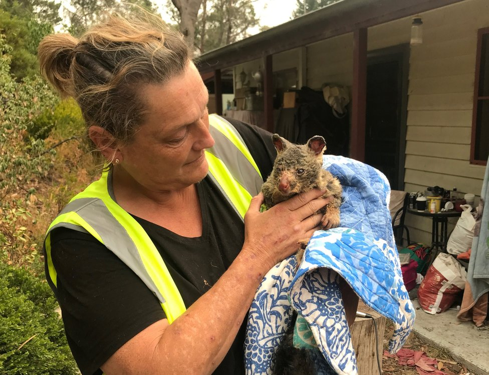 A volunteer holds a burnt brushtail possum