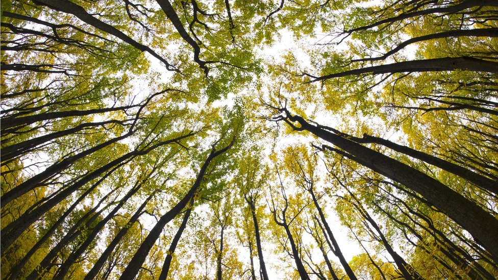 Trees in the Shenandoah National Park in Virginia
