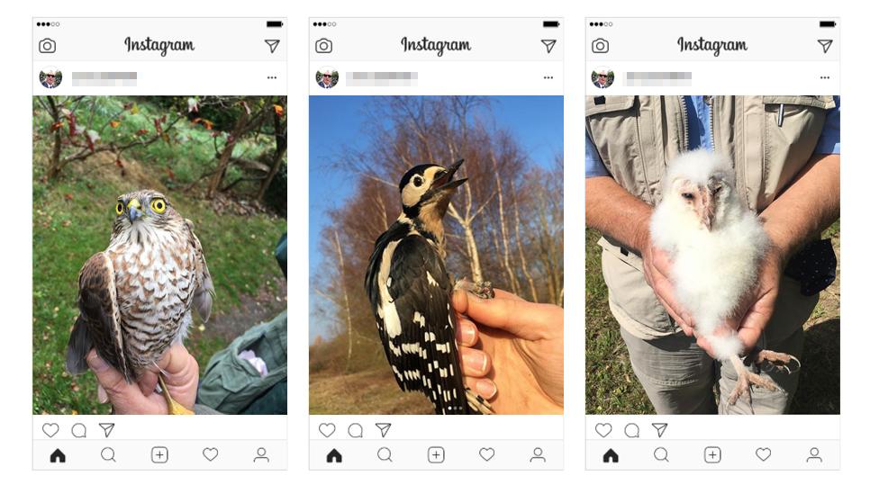 Jim Todd's Instagram posts of birds