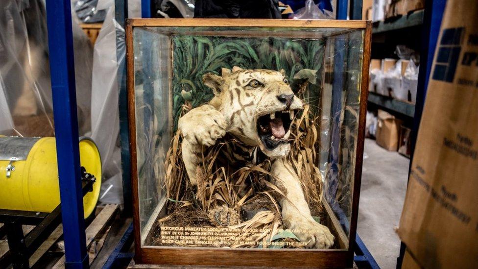 Preparirani tigar