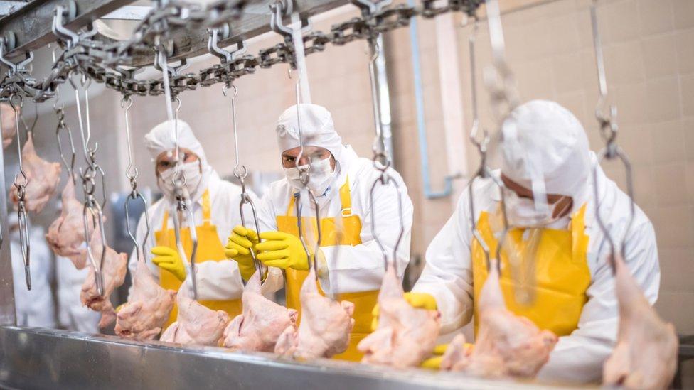 Planta procesadora de carne