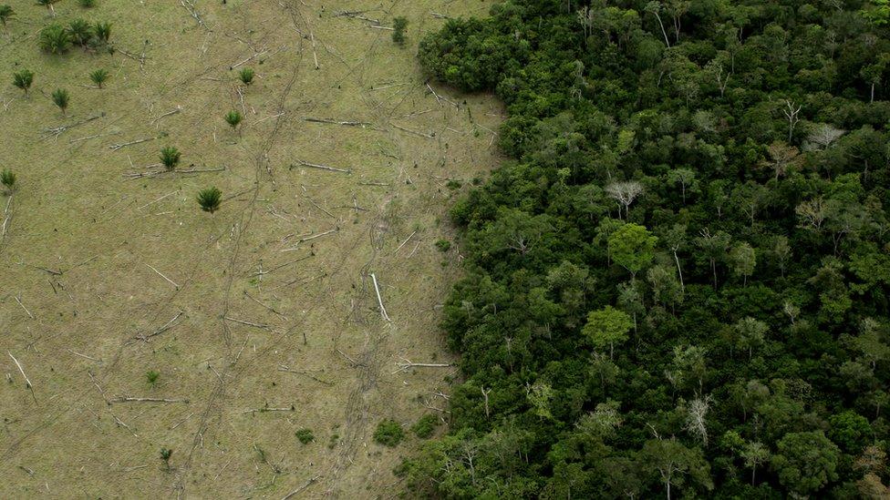 Deforestación en el estado de Mato Grosso.