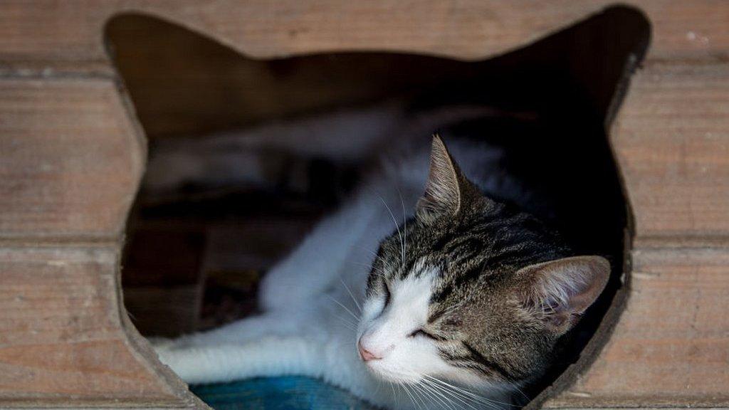 Kenyataan Rumit Tentang Dengkuran Kucing Bbc News Indonesia