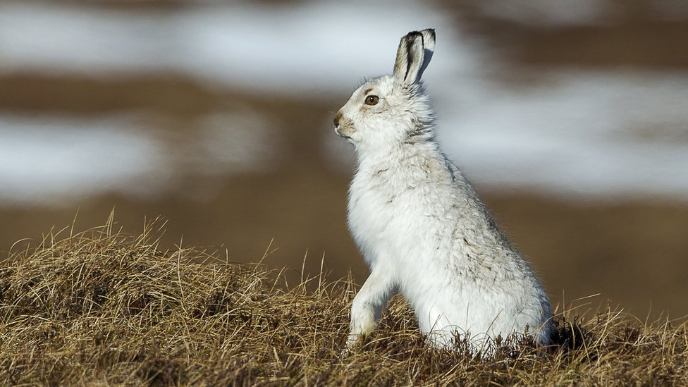 'Evidence not ideology' should determine mountain hare law