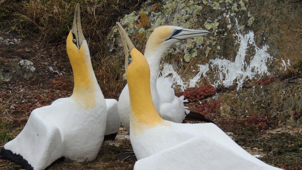 Nigel with two replica birds