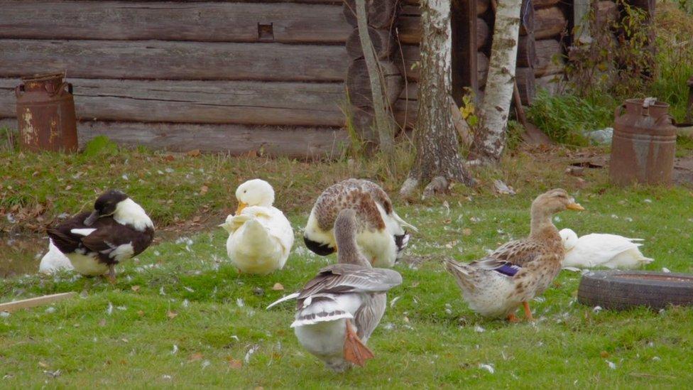 تعتني مارينا بأسرتها اضافة إلى منزلها وحديقتها الحيوانات التي تحتفظ بها الأسرة من بط وأوز ودجاج وأرانب اضافة إلى الكلاب والقطط