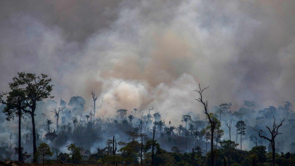 Incendios en el Amazonas el pasado mes de agosto.