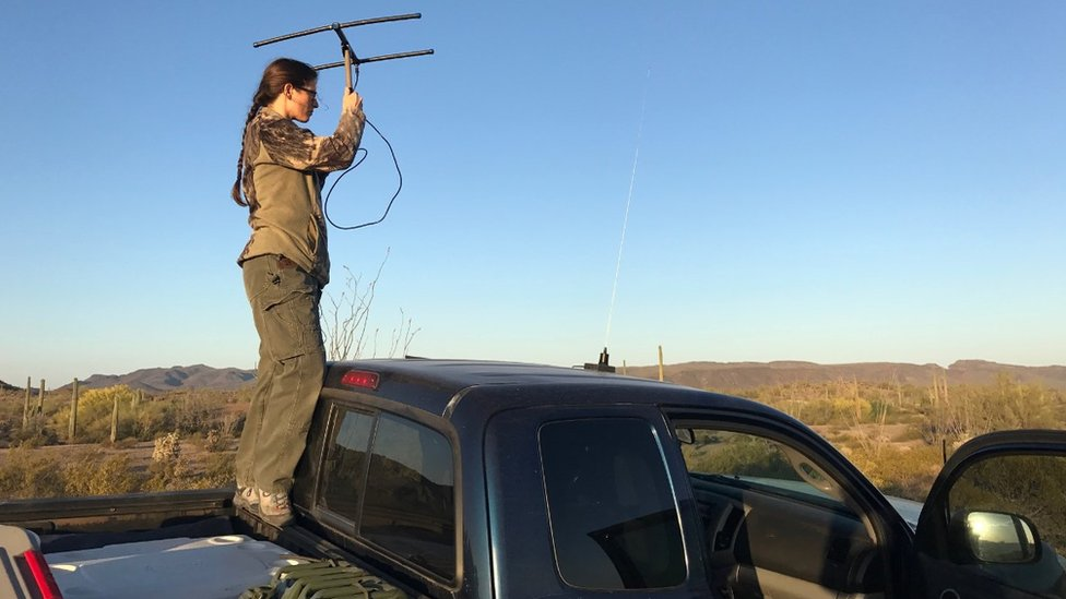 Stephanie Doerries searches for pronghorn