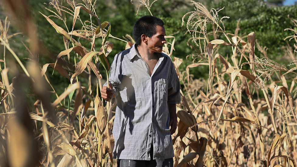 Plantaciones dañadas en Honduras.