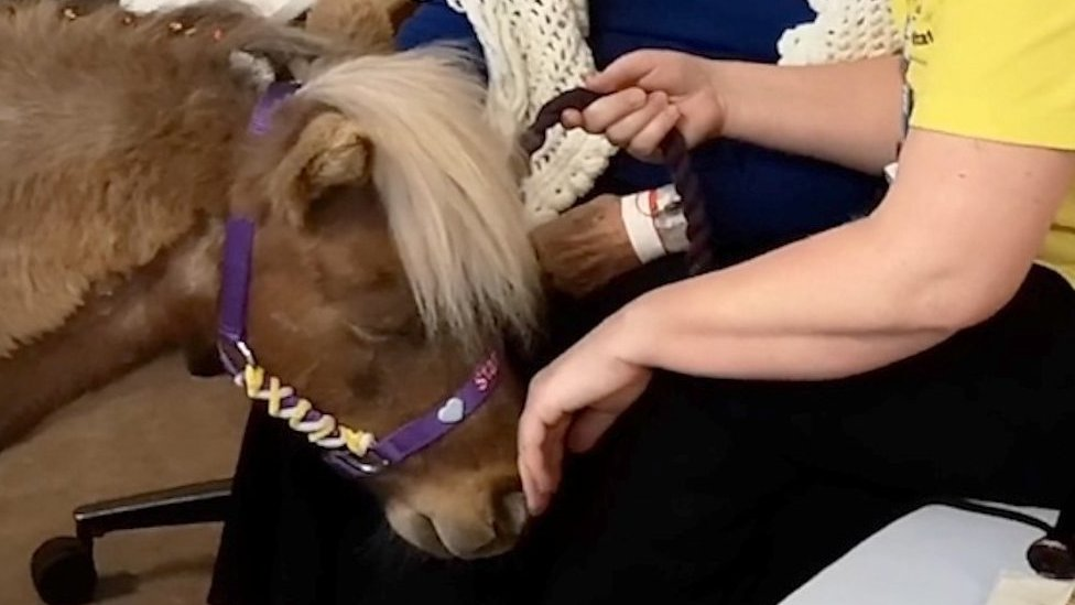 Therapy horse visits patients in hospital
