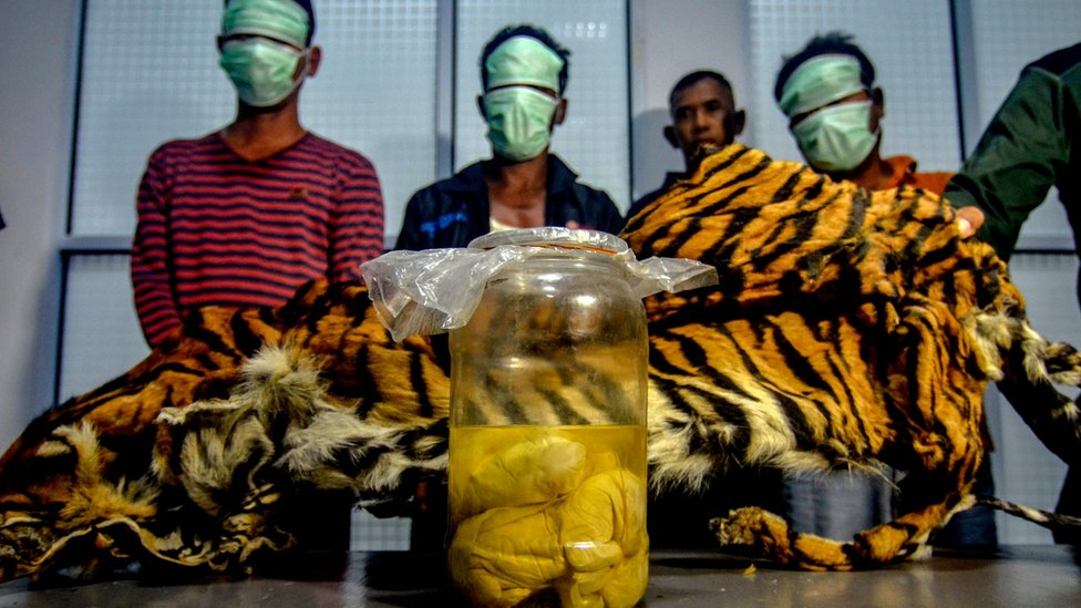 This picture taken on December 7, 2019 shows the three Indonesian men, with a seized Sumatran tiger skin and four tiger foetus in a jar