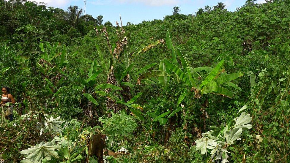 Secondary rainforest, Brazil (Image: Frans Bongers)