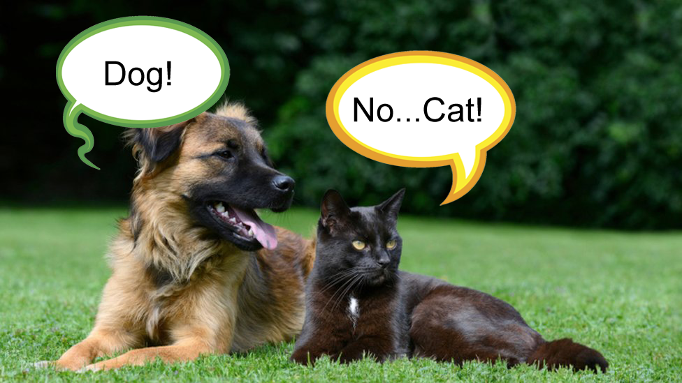 A dog and a cat arguing over their semantic names