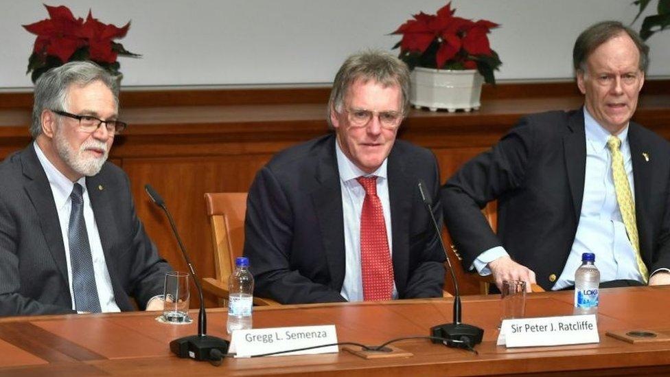 Peter Ratcliffe, Gregg Semenza (izquierda) y William Kaelin