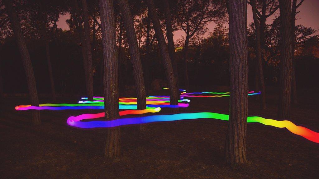 Floresta com feixe de luz colorido