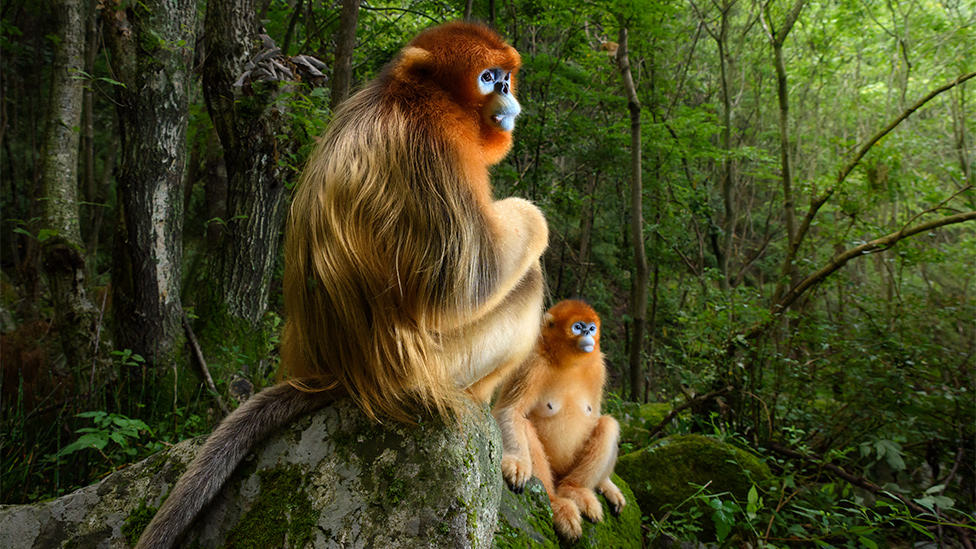 Gazing monkeys image wins top wildlife photo award