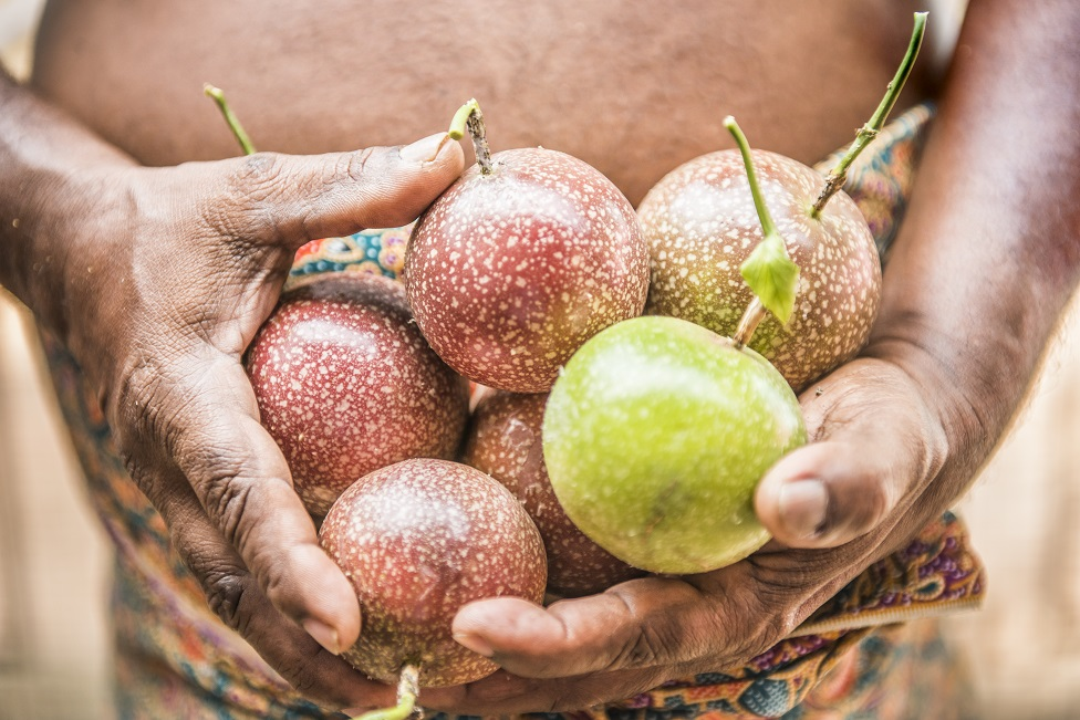 Hands holding passion fruit