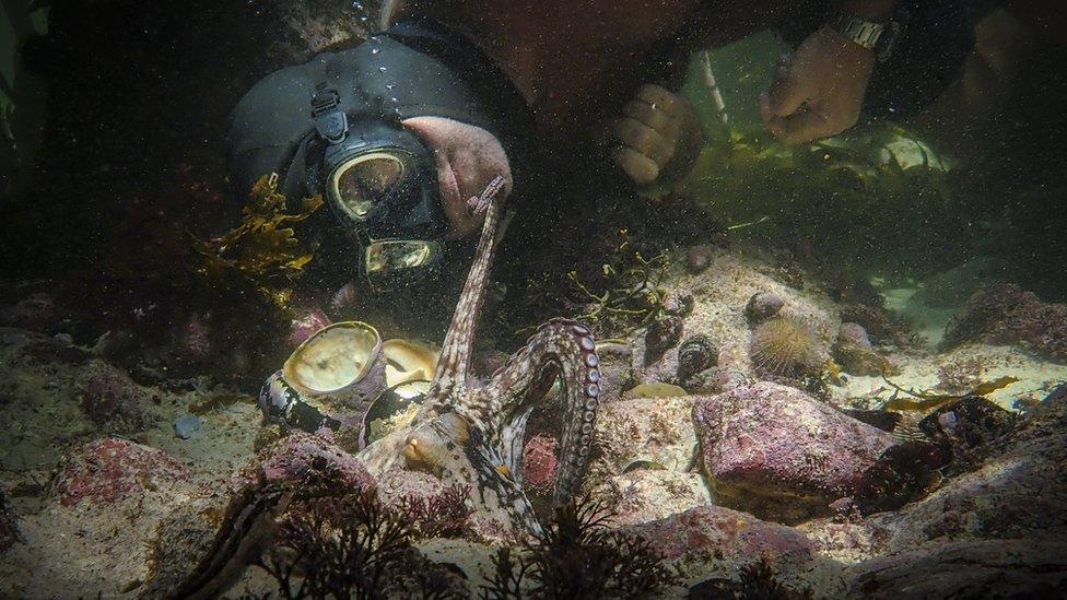 Imagen del documental My Octopus Teacher