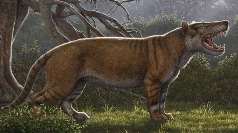 Kenya'da bir müzedeki dolapta milyonlarca yıl önce yaşamış dev bir aslanın fosili bulundu