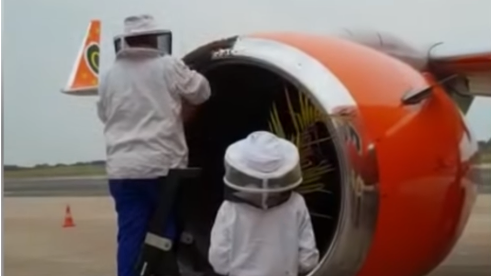 Bee experts remove bees from the plane engine