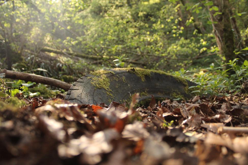 Guma koju je preuzela priroda, u Somersetu