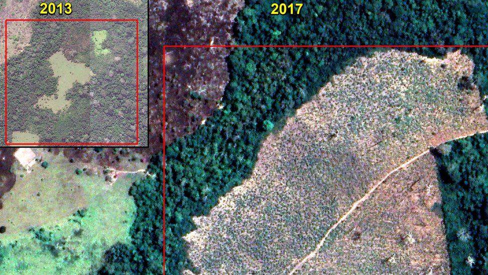 Imagen satelital que muestra pérdida de bosque entre 2013 y 2017