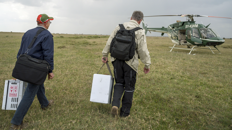 Cesare Galli (L) and Thomas Hildebrandt (R) walk to the Kenya Wildlife Services helicopter after the egg-removal procedure - 2019