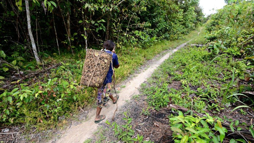 Jamamadi carrega cesta de palha nas costas em caminho pela mata