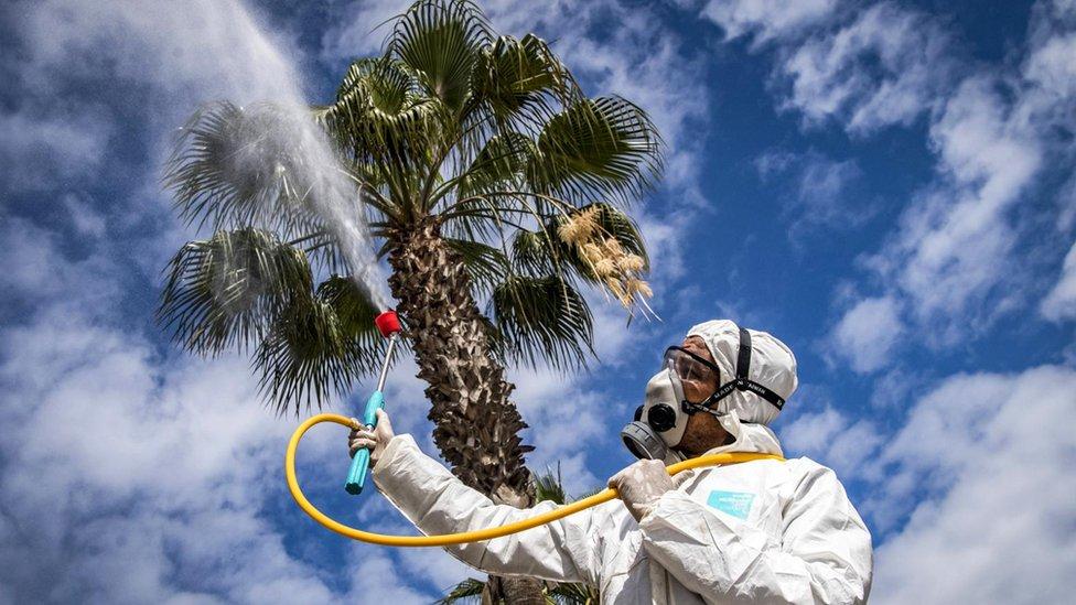 Laboratuvar araştırmaları ve modellemeler yeni Koronavirüs'ün daha sıcak ve rutubetli ortamlarda daha az süreyle canlı kalacağına işaret ediyor